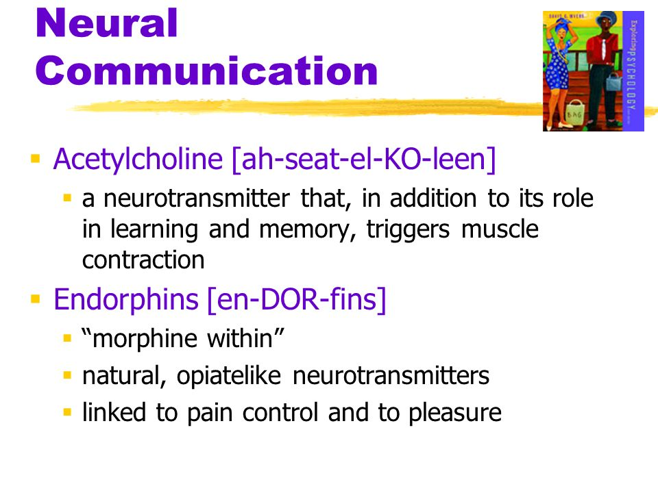 Neural Communication Acetylcholine [ah-seat-el-KO-leen]
